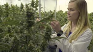 Σύστημα άλεσης ακριβείας – Βελτιστοποιημένο για επεξεργασία κάνναβης (Cannabis Processing)